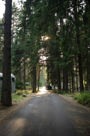 Farragut State Park: Campground road