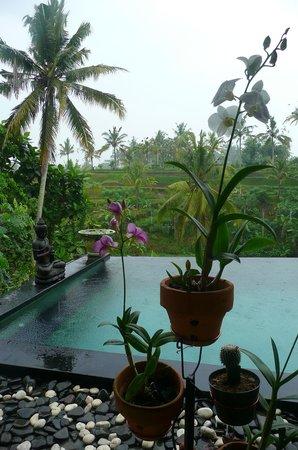 Capung Sakti Villas: Petit matin sur la piscine