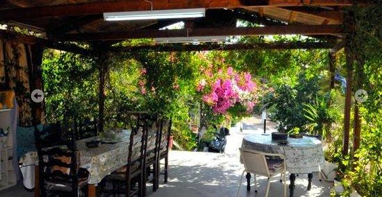 Viky Studios: Garden