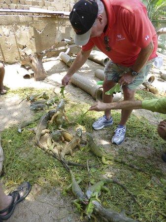 Aventura Mundo : Feeding the iguanas.