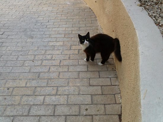 The King Jason Paphos: 1 Bedroomed Apartment - New Friend