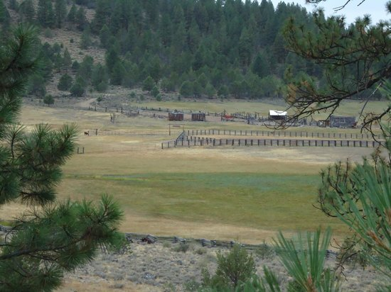 Aspen Ridge Resort: View of some of the cattle