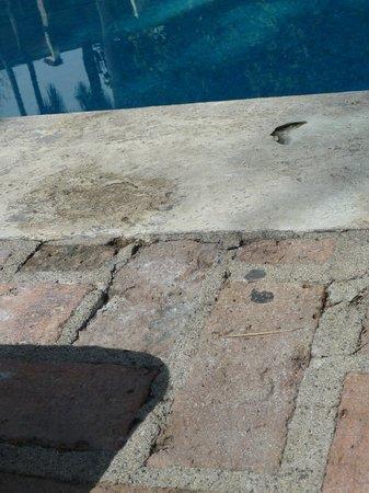 Krystal Puerto Vallarta : pool side