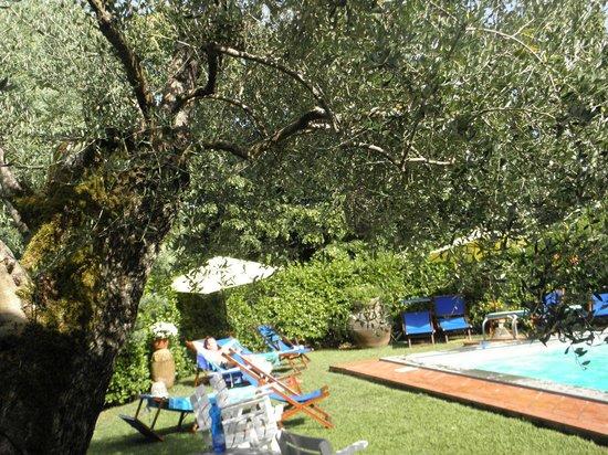 Agriturismo Il Cerro : piscina tra ulivi vasi e fiori...