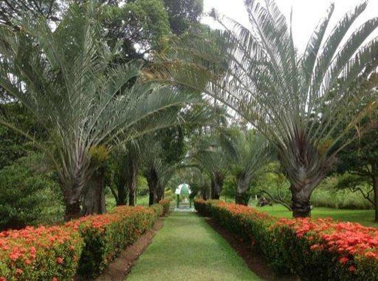 Botanical Gardens: scenic