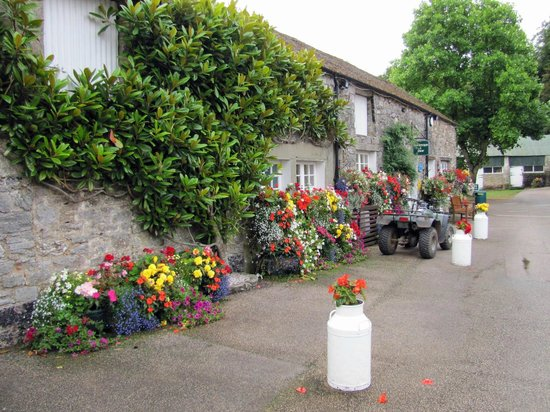 Dornafield Camping Site: Floral reception at Dornafield