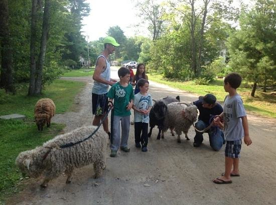 Searsport Shores Oceanfront Campground: walking the goats!