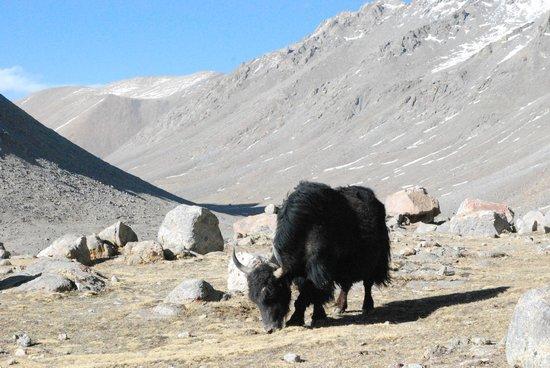 Mount Kailash : Yak burgers, yummm!!