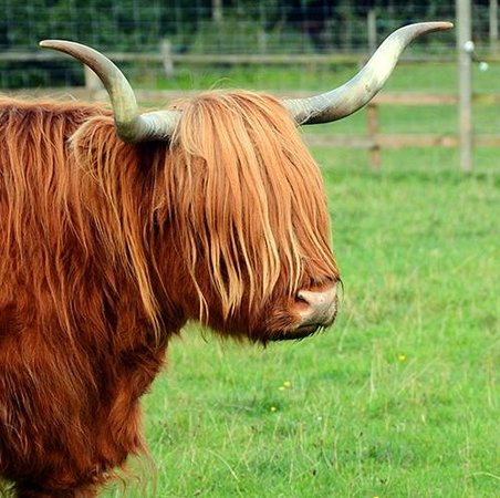 "Great Glen Bed and Breakfast: One of the Highland ""Coos"""