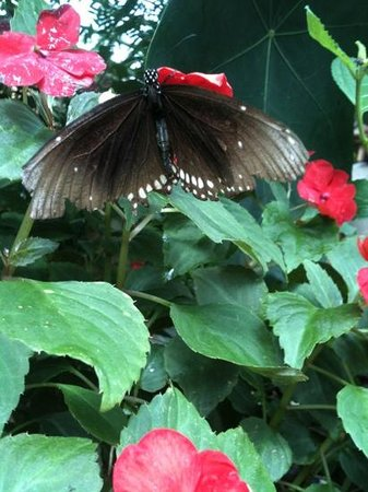 Magic Wings Butterfly Conservatory and Gardens: photo doesn't do this creature justice