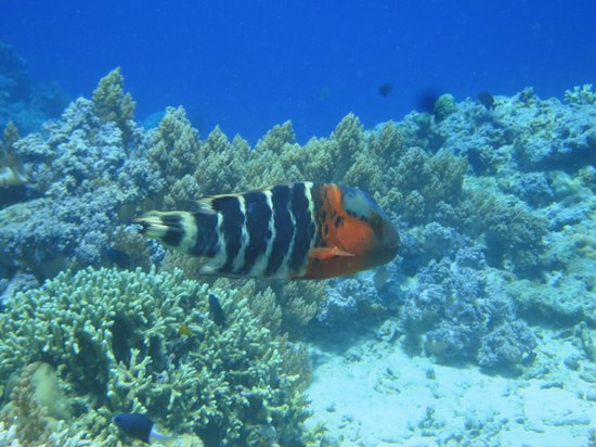 Menjangan Island: fish