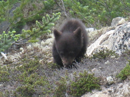 Chilkoot Charters & Tours : One of the cubs
