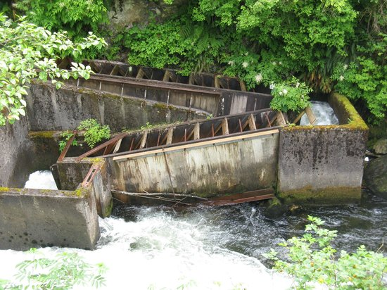 Tongass Historical Museum: Fish ladder (we visited mid-June, a couple weeks before the salmon run)