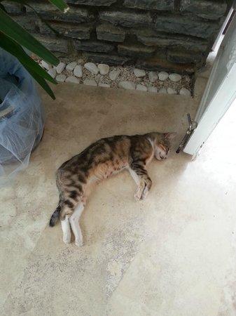 Asmin Hotel: Cat in the Lobby