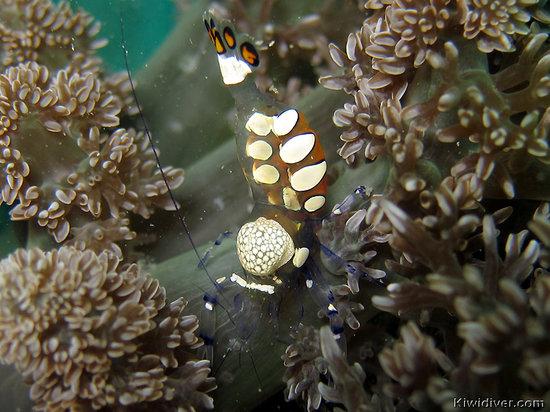 Kiwidiver Dive Centre: Phuket Dive Shop