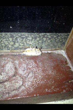 Pinar Hotel: Tote Insekten