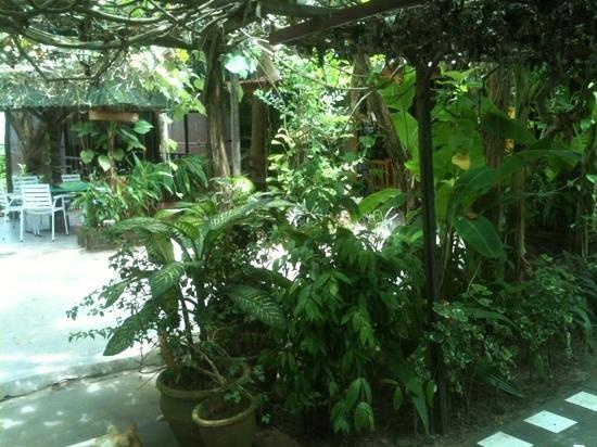 Gecko Guesthouse Langkawi : Gecko