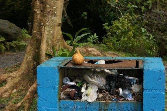 Wigmore's Waterfall: Overfllowing rubbish bin