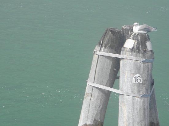 Venedik, İtalya: A bird at Venetian Lagoon