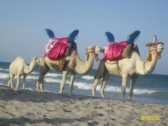 Djerba Mare: cammelli in spiaggia