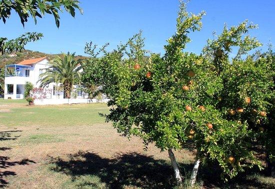 Ostria Hotel & Apartments: Pomegranates