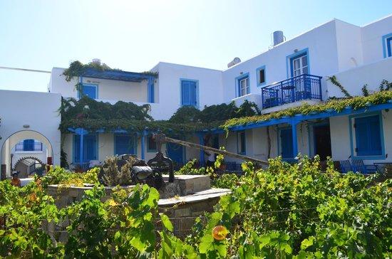 Agios Prokopios Hotel: vigna