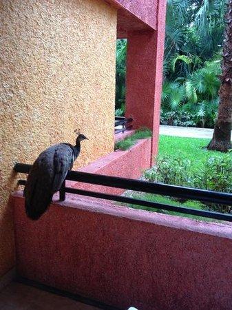 Iberostar Tucan Hotel : seb-ass