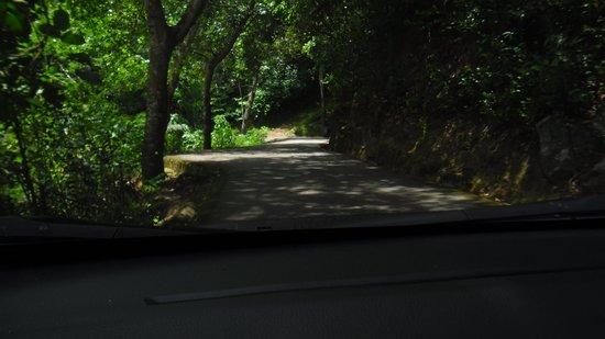 narrow access road