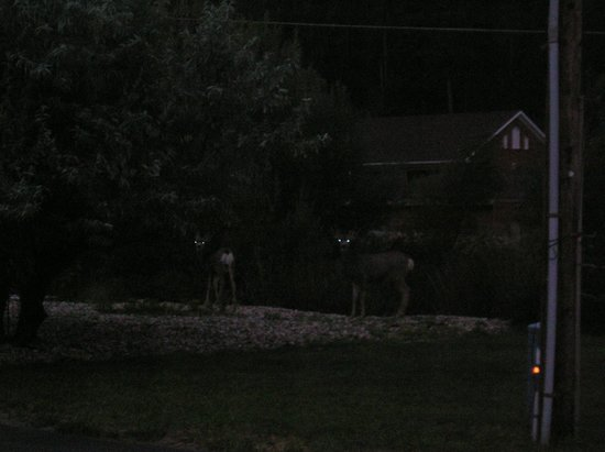 Black Hills Inn & Suites: Early morning deer