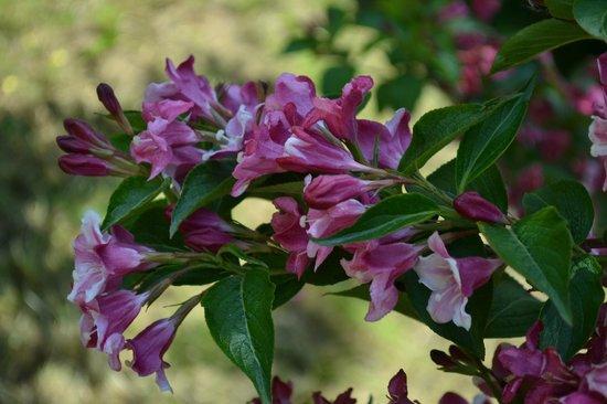 Botanical Gardens (Botaniska Tradgarden): flowers