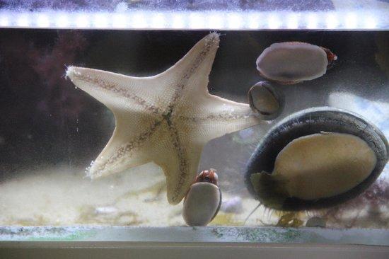 Santa Monica Pier Aquarium: La conchiglia più grande mentre mangia un'alga