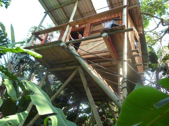 Mantis & Moon Backpackers Lodge: Baumhaus