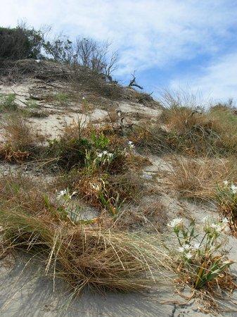 Spiaggia Alimini : la duna.....non calpestare