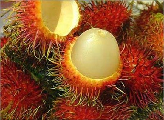 Эррадура, Коста-Рика: Rambutan: In Costa Rican Spanish, it is known as mamón chino, due to its Asian origen