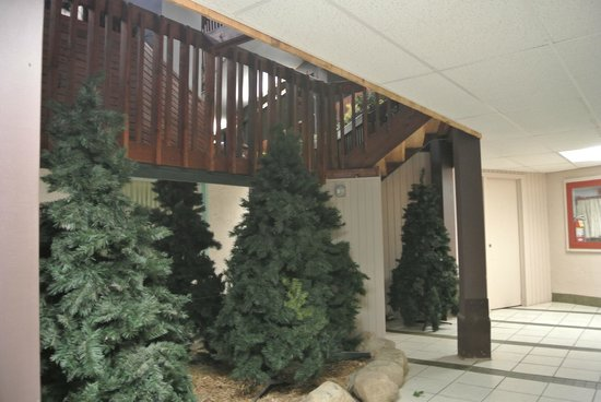 Breezy Point Resort : Xmas Trees in front of room
