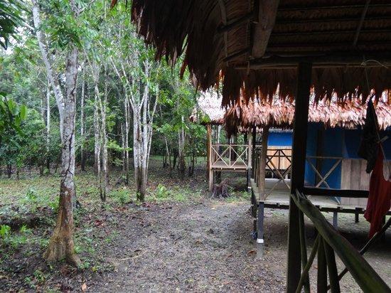 Muyuna Amazon Lodge : Jungle side of this row of cabins
