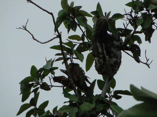 Muyuna Amazon Lodge: 1 of 7 sloths we saw