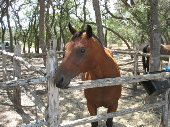 Bar M Guest Ranch, LLC: The shady Corral showing one of the horses - Diamond