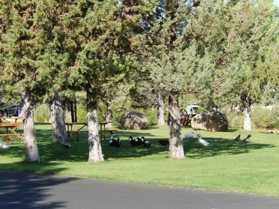 Bend sisters garden rv resort or campingplads Sisters garden