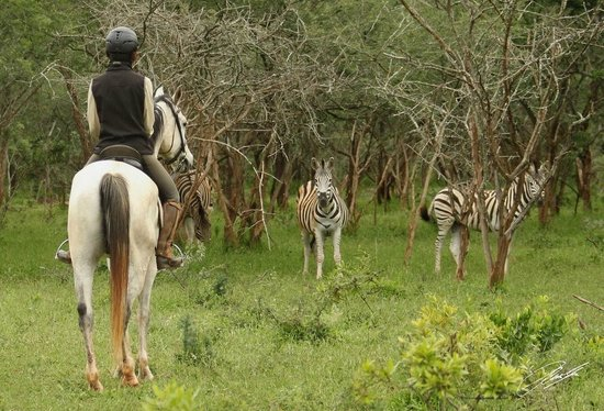 Pakamisa Private Game Reserve: Riding with zebras