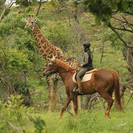 Pakamisa Private Game Reserve: Isabella on Mon Ami & close up of Giraffe bull