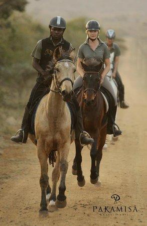 Pakamisa Private Game Reserve: Galopping along