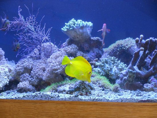 St Michael's Hotel & Spa : Exotic fish tank between lounge and dining room