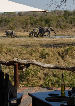 Simbambili Game Lodge: View from breakfast