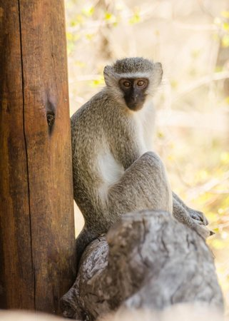 Simbambili Game Lodge : visitor during siesta