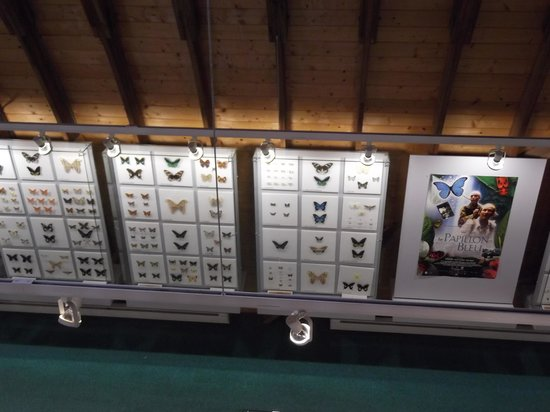 Exhibit at the Newfoundland Insectarium