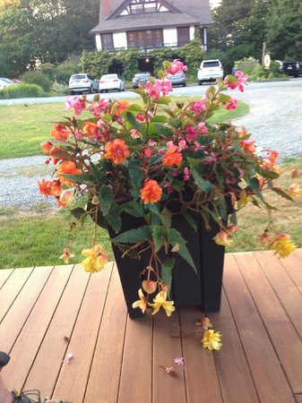 Yellow House Bed & Breakfast : Pretty flowers on veranda