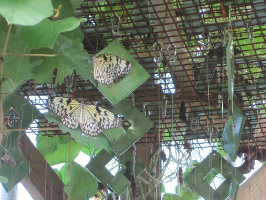 Butterflies at Pili Palas Nature World