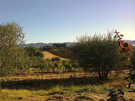 Agriturismo Il Belvedere : Vista verso est (1)