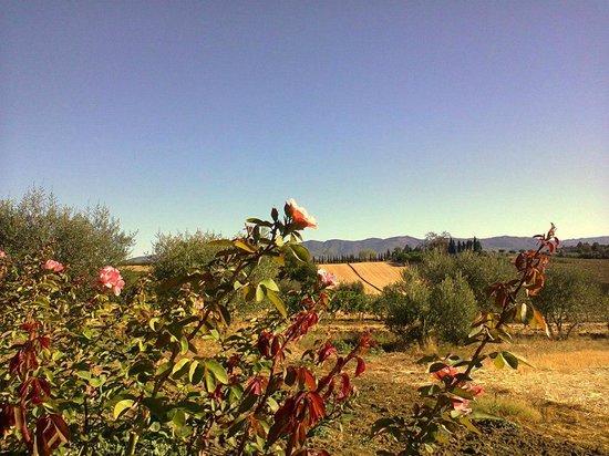 Agriturismo Il Belvedere : Vista verso est (2)